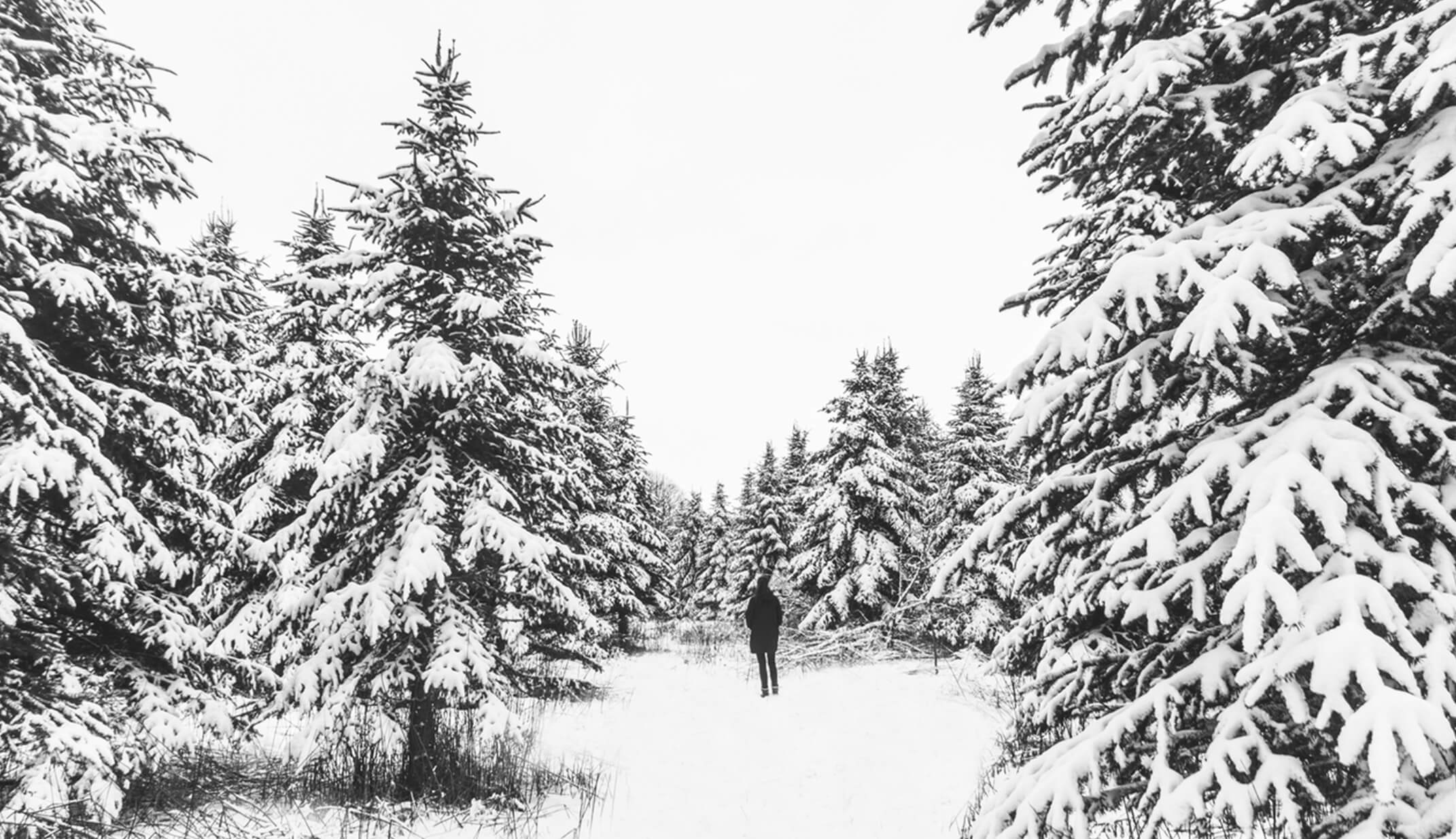 winter trees poland snow heavy view white cold street photography travel UGC content